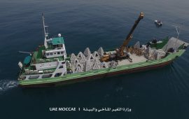MOCCAE installs 100 artificial caves at Jumeirah Fishing Harbour