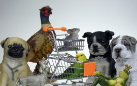 Pet shop employees trained to improve aspects of animal welfare